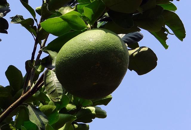 grapefruit-336962_640