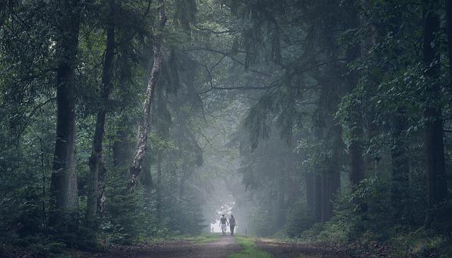 森 深い森